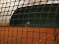 Foto di Claudia Cavalleri - Sotto rete Tennis